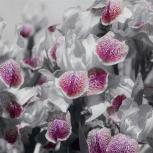3Д фотообои с цветами, Саратов