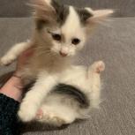 Отдадим в добрые руки котят!!!, Саратов