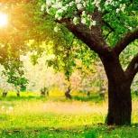 Покос травы, поросли, спил деревьев, Саратов