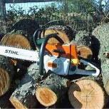 Спил деревьев, Саратов